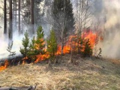 В лесах Ростовской области объявлен пожароопасный период