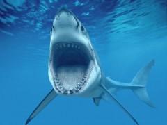 В Приморье рыбаки поймали на удочку акулу длиной 3 м