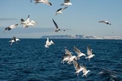 В Баренцевом море построят четыре острова