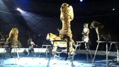 Глава Кубани поручил благоустроить площадь перед цирком в Краснодаре