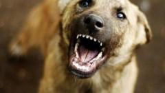 В Иркутской области собаки до смерти загрызли маленького мальчика