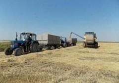 В Краснодарском крае началась уборка риса