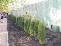 В Краснодаре завершается озеленение участка ул. Красной