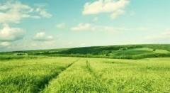 Сбор сахарной свеклы на Кубани превысил 5 млн тонн