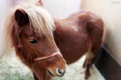 Беженец изнасиловал пони в детском зоопарке Берлина