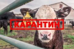 В донском хуторе Ходаков снят карантин по бешенству