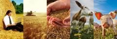 На Дону за 11 месяцев индекс производства сельхозпродукции превысил 108%