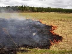 Кабмин РФ запретил разводить костры и жечь траву около дорог