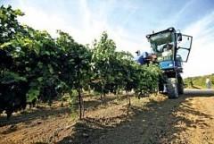 В Анапе возводят винодельческое хозяйство