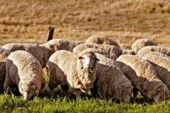 ФНС: Ограничено право на применение налоговых льгот для налогоплательщиков единого сельскохозяйственного налога