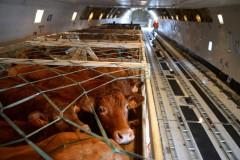 Донские ветинспекторы пресекли перевозку животных без документов