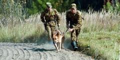 Ростовские пограничники пресекли контрабанду свыше 100 кг лома цветных металлов
