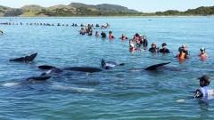В Адлере стартуют бесплатные курсы по оказанию помощи диким дельфинам
