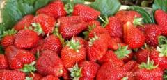 В Адыгее развивают итальянские технологии в сельском хозяйстве