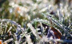 21-22 апреля в Краснодарском крае возможны заморозки