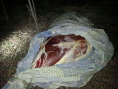 Донские пограничники пресекли контрабанду свыше 750 кг мяса