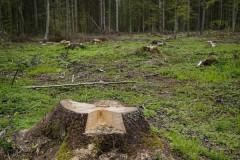 В Курганинском районе Кубани мужчина ждет суда за незаконную рубку леса