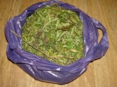 В Северной Осетии за сутки пресечено шесть фактов незаконного оборота наркотиков