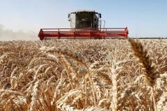 Кубанские фермеры вошли в число лидеров АПК России