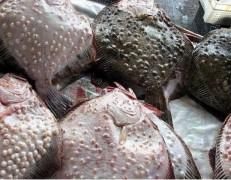 Краснодарские пограничники задержали двух браконьеров из украинского Бердянска