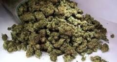 В Северной Осетии за сутки пресечено четыре факта незаконного оборота марихуаны