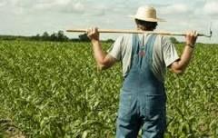 Более 100 млн рублей выделено на гранты начинающим сельхозкооператорам