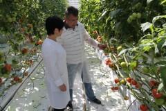 Кубань остается одним из главных производителей тепличных овощей в России