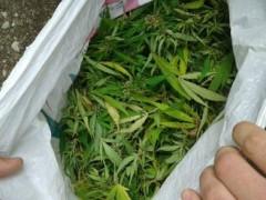 В Моздоке из незаконного оборота изъято около 300 гр марихуаны