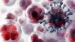 Ученые нашли способ заблокировать распространение четырех видов рака