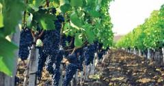 Краснодарский край наращивает экспорт винодельческой продукции в Европу