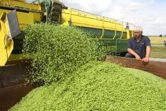 На Кубани выработано свыше 100 млн условных банок консервов зеленого горошка