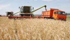 Валовой сбор зерновых на Кубани достиг почти 4 млн тонн