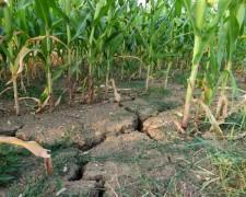 В 19 районах Волгоградской области посевы оказались под угрозой из-за жары и засухи