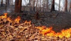На Черноморском побережье и в северо-восточных районах Кубани снова пожароопасно