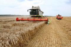 На Дону обмолочено свыше 4 млн тонн ранних зерновых.