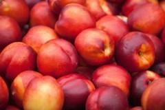 Россельхознадзор не пустил в Дагестан 18,8 тонны зараженных персиков и нектаринов из Азербайджана