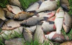 Жители Ейского района Кубани осуждены за браконьерство