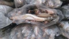 10 тонн рыбы с подложными документами задержано в Ростовской области