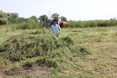 В Калмыкии полицейскими уничтожено более 4 тысяч кустов дикорастущей конопли