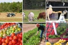 В Астраханской области в I полугодии сельхозпроизводство выросло на 5,5%