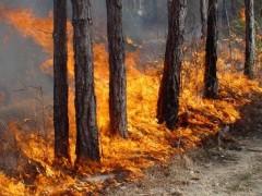В Краснодарском крае снова пожароопасно
