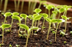 Краевое субсидирование аграриев на приобретение элитных семян увеличилось на 30%