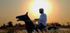В Краснодарском крае появится первый экосад