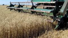 На Ставрополье урожай зерновых в 2018 году снизится на 20%